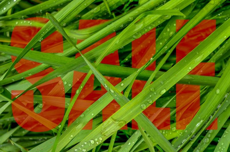 grönt gräs vår